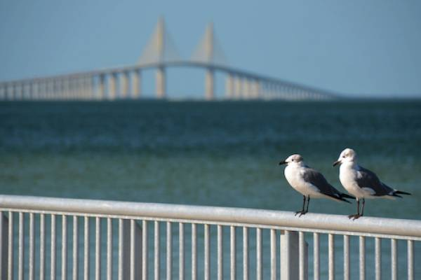 Skyway Fishing Pier State Park